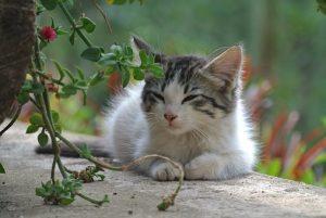 cropped-cat-1716220__340-3.jpg