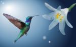 hummingbird-4156834__340