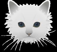 cat-1143396__340