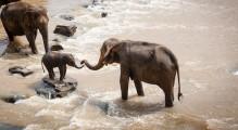 elephants-1900332__340 (2)