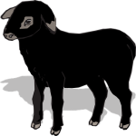 sheep-307568__340